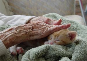 Concilia2 cuidados paliativos