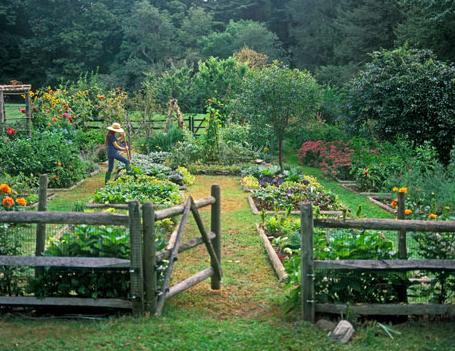 jardín comestible